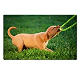 Liili Premium Large Table Mat 28.4 x 17.7 x 0.2 inches puppy dog a plays with the leash in grass Image ID 21848087