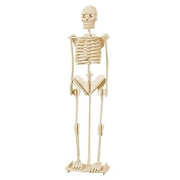 Child Assemble Human Skeleton Model 3d Wood Puzzle Toy Construction