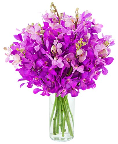 Kabloom Moondance Purple Mokara Orchids (20 stems) - The KaBloom Collection Flowers With Vase Moondance Collection