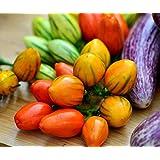 """samenfest von unserer Farm schöne rote Farbe Aubergine /""""Goyo Kumba/"""""""