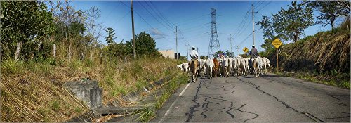 Men with Horses on Road, Costa Rica by Panoramic Images Laminated Art Print, 34 x 12 inches