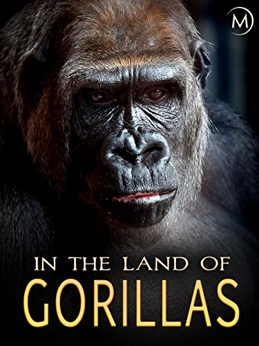 In the Land of Gorillas (Mountain Gorilla)