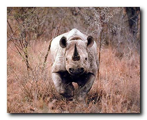Black African Rhinoceros Wild Animal Wall Decor Art Print Poster ()