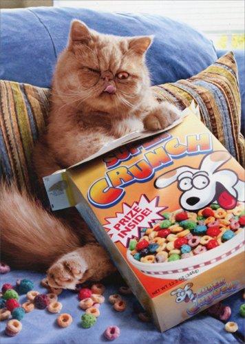 Cereal Cat Pop Up