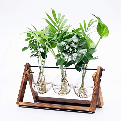 (Cyan Shirt Walnut Stand Glass Planter Bulb Vase with Metal Swivel Holder for Hydroponics Plants )