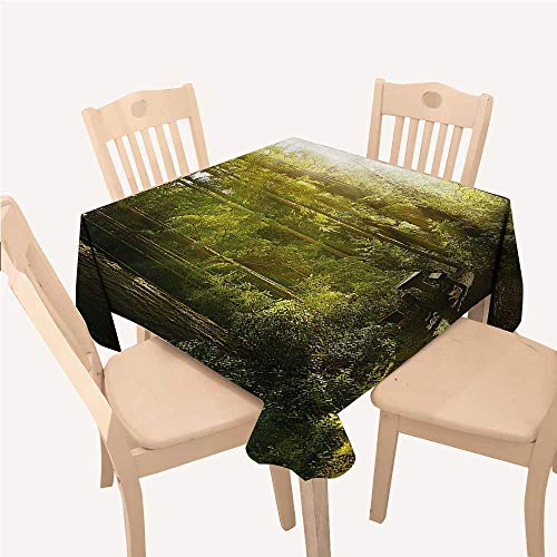 WilliamsDecor Nature Checked Tablecloth Sunny Rainforest with Wood Bench in Olympic National Park Washington USA PhotoGreen Yellow Square tablecloths W50 xL50 inch]()