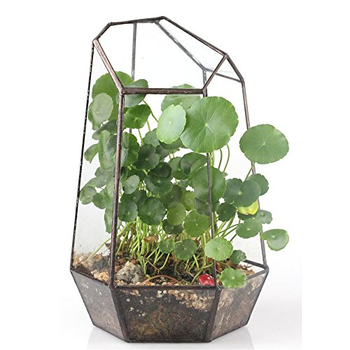 9.8 inches Height Irregular Glass Geometric Terrarium Box Tabletop Succulent Plant Planter Flower Pot Fern Moss