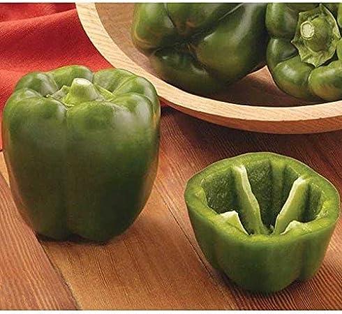 green bellpepper 50 seeds