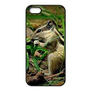 Squirrel Hight Quality Plastic Case for Iphone 5s