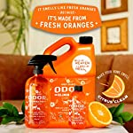 ANGRY ORANGE Ready-to-Use Citrus Pet Odor Eliminator Pet Spray - Urine Remover and Carpet Deodorizer for Dogs and Cats 10