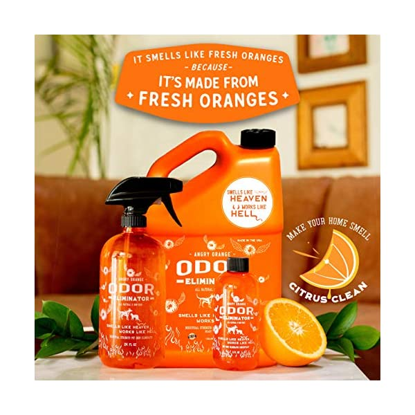 ANGRY ORANGE Ready-to-Use Citrus Pet Odor Eliminator Pet Spray - Urine Remover and Carpet Deodorizer for Dogs and Cats 5