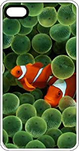 Clown Fish Hiding In An Anemone Clear Rubber Case for Apple iPhone 4 or iPhone 4s