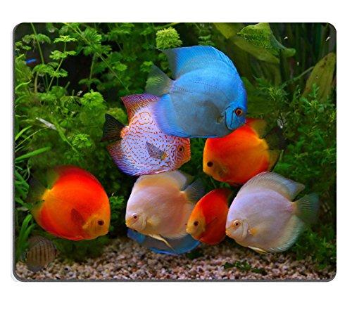 liili-mouse-pad-natural-rubber-mousepad-image-id-27264117-discus-symphysodon-multi-colored-cichlids-