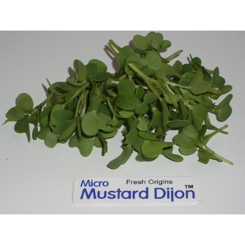 Micro Greens - Mustard Dijon - 4 x 4 oz by For The Gourmet