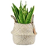 "LEEPES Natural Craft Seagrass Belly Basket White Zigzag Storage Laundry, Picnic Woven Straw Beach Bag - Plant Pots Cover Indoor Decorative(10"" Opening Diameter x10.5 Height,White Zigzag Seagrass)"