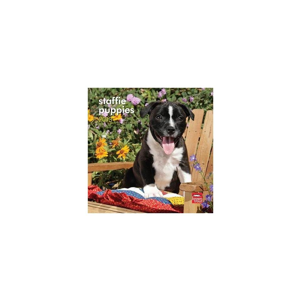 (7x7) Staffordshire Bull Terrier Puppies   2013 Mini