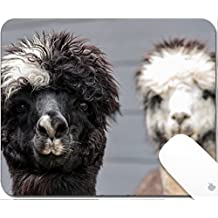 Luxlady Gaming Mousepad 9.25in X 7.25in IMAGE: 40101452 Pair of black white and rose gray alpacas on a dark blue barn background
