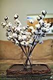 3 Cotton stems,Cotton sprays, 18 inch Cotton branch ,Cotton boll stalks ,Cotton bolls , Cotton boll stem, Country Rustic bolls stems , Dried Cotton boll 18 inch offers