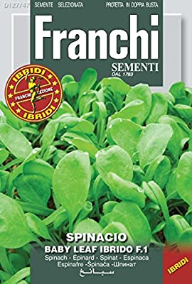 Italian Heirloom Spinach - Baby Leaf
