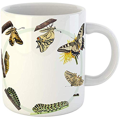 Swallowtail Life Cycle - Coffee Tea Mug Gift 11 Oz Funny Ceramic Green Caterpillar Life Cycle of the Swallowtail Butterfly Metamorphosis Gifts For Family Friends Coworkers Boss Mug