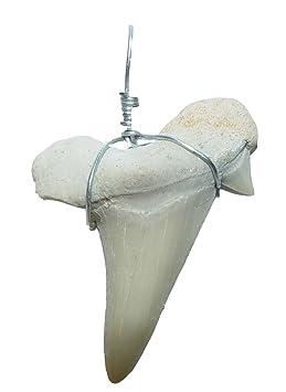 Haifisch - Zahn versteinert als Kettenanhänger mit Metallöse und Band ca. 3 Millionen Jahre alt
