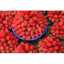 HEIRLOOM NON GMO Alexandria Strawberry 50 seeds