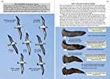 Oceanic Birds of the World: A Photo Guide