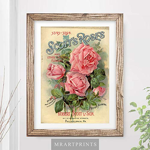 VINTAGE PINK ROSES FLOWERS FLORAL ADVERTISING ART PRINT Shabby Chic Home Decor Victorian Illustration Painting Wall Picture A4 A3 A2 (10 ()