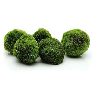 Pevor Pack of 4 Marimo Moss Balls