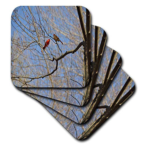 3dRose Dreamscapes by Leslie - Birds - Male and Female Cardinals Together - set of 4 Coasters - Soft (cst_314264_1)