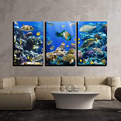 Coral and Fish in The Red Sea Egypt x3 Panels