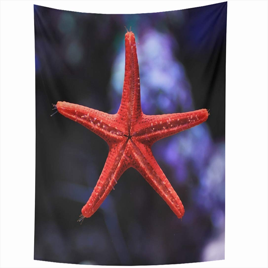 Ahawoso Tapestry 60x90 Inch Red Underwater Read Star Tropical Fish Aquarium Animals Wildlife Starfish Water Nature Colorful Coral Ocean Sea Tapestries Wall Hanging Home Decor Living Room Bedroom Dorm by Ahawoso