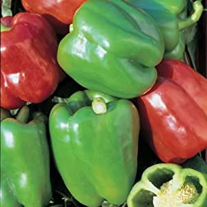 Kings Seeds - Pepper (Sweet) Mixed - 100 Seeds