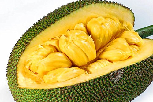 Jackfruit 10KG (1 Fruit)