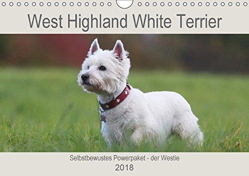 West Highland White Terrier - Selbstbewustes Powerpaket - der Westie (Wandkalender 2018 DIN A4 quer): Kleine weiße Powerpakete - so sind sie bekannt - ... [Kalender] [Apr 13, 2017] Mielewczyk, Barbara