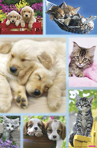Trends International Puppies and Kittens - Collage Wall Poster 22.375