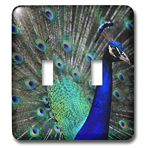 (3dRose Stamp City - birds - Photograph of a stunning male peacock showing off for the camera. - Light Switch Covers - double toggle switch (lsp_290766_2))