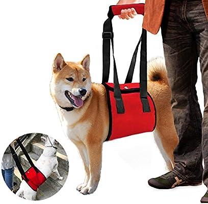 Color You - Arnés de rehabilitación portátil para perros con patas ...