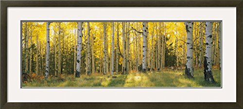 Art.com Aspen Trees in Coconino National Forest, Arizona, USA by