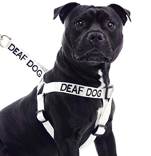 Deaf Dog White Color Coded L-XL Non pull Dog Harness Prevents Accidents By Warning Others of Your Dog in Advance
