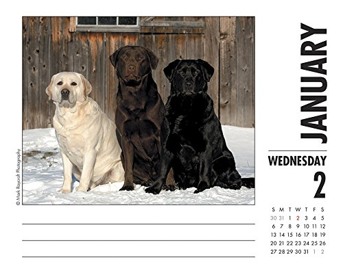 Just Labs 2019 Box Calendar (Dog Breed Calendar)