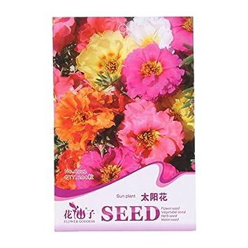 Kofun Blume Samen Schonen Und Vivid Blume Gemuse Pflanzen Samen