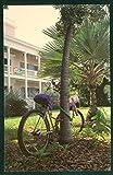 Key West Florida Bicycle Series Vintage FL Postcard