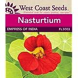 Nasturtium Seeds - Empress of India (approx. 40 seeds)