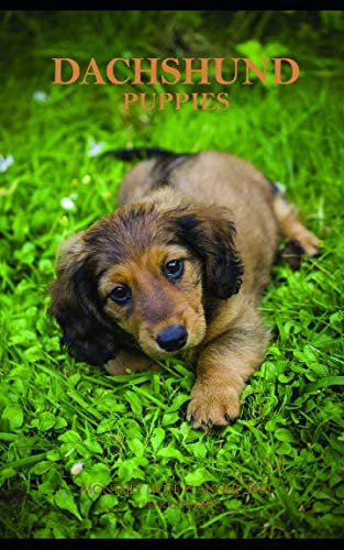(Dachshund Puppies Monthly Note Planner 2019 1 Year Calendar)