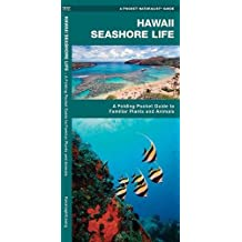 Hawaii Seashore Life: An Introduction to Familiar Species