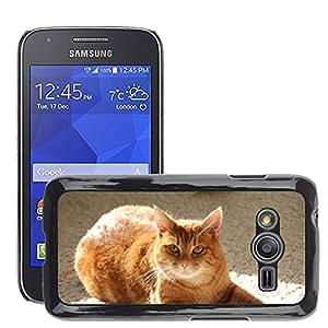 Etui Housse Coque de Protection Cover Rigide pour // M00110521 Hangover Gato Rojo Blanco Animal Purr // Samsung Galaxy Ace4 / Galaxy Ace 4 LTE / SM-G313F
