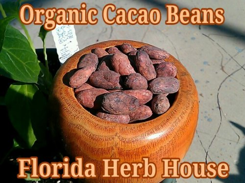 Cacao Beans Whole Certified Unrefined product image