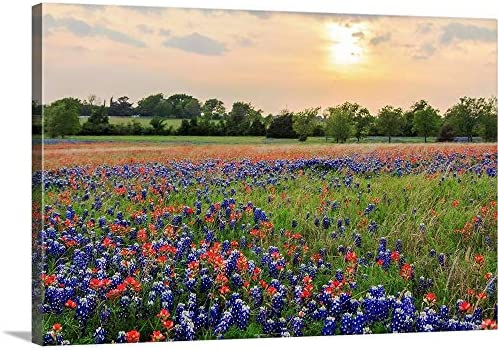 GREATBIGCANVAS A Field of Texas Wildflowers Canvas Wall Art Print