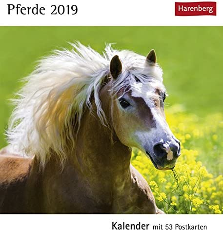 Postkartenkalender Pferde - Kalender 2019 - Harenberg-Verlag - mit 53 heraustrennbaren Postkarten - 16 cm x 17,5 cm